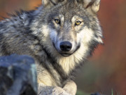 Taming The WOLF: Managing Risk In A Regulatory Environment