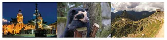 PADDINGTON BEAR'S PERU WITH DIALAFLIGHT