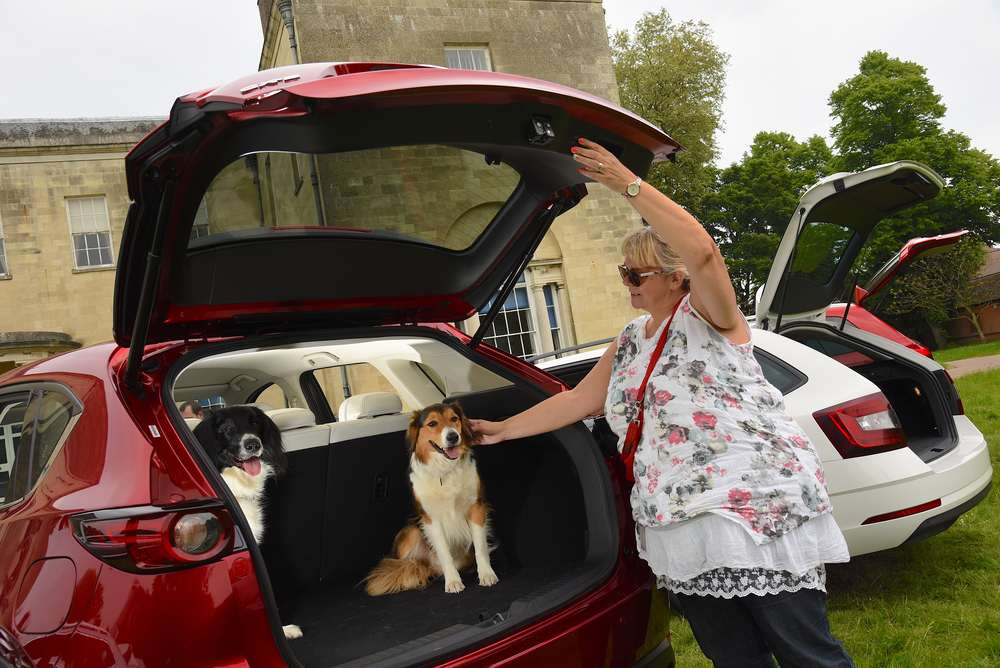 What Car crowns Mazda CX-5 the pawfect car for dogs during Pet Appreciation Week-3