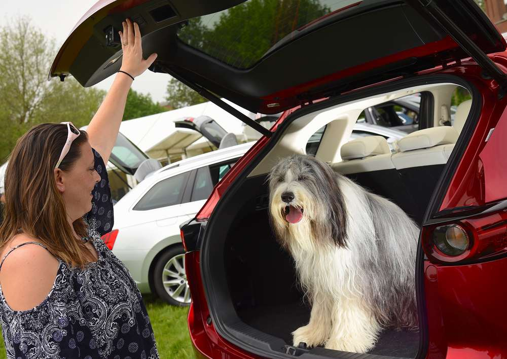 What Car crowns Mazda CX-5 the pawfect car for dogs during Pet Appreciation Week-4