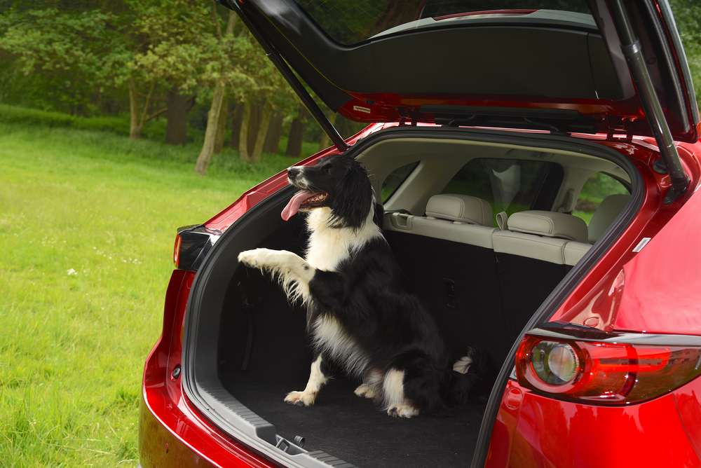 What Car crowns Mazda CX-5 the pawfect car for dogs during Pet Appreciation Week-5