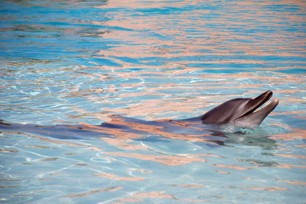 Swim with a Bottlenose Dolphin at Orlando's Discovery Cove