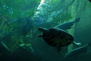 Discover the beauty and diversity of Northern California aquatic life at Aquarium of the Bay