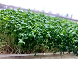 Veganism Boom Led to $1.2 million seed funding growth for High-Tech Garden Startup