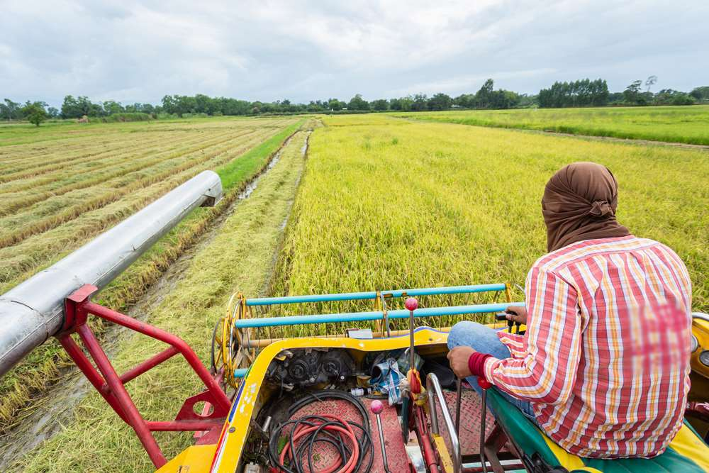 African farmers at the heart of tomorrow's global economy