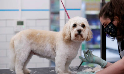 Pets At Home backs annual profit forecast as sales jump on higher pet care demand 22