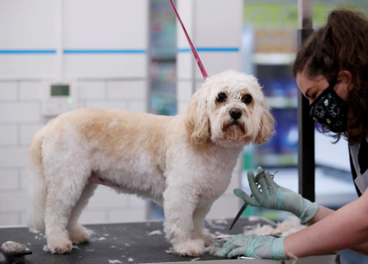 Pets At Home backs annual profit forecast as sales jump on higher pet care demand 23