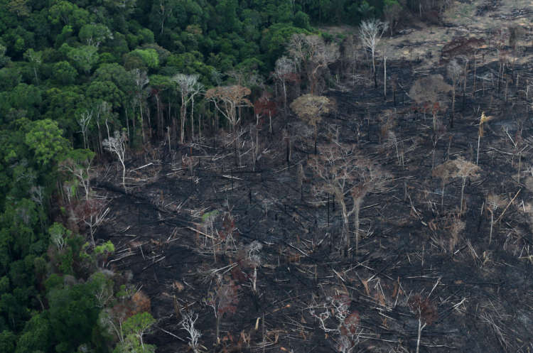 Amazon deforestation rose 17% in 'dire' 2020, data shows 1
