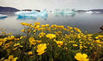World Bank commits to annual reports on climate action plan 5