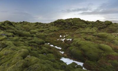 Energy lessons: What the UK can learn from Iceland 22