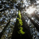Fund nature protection now or face huge losses, says World Bank 22