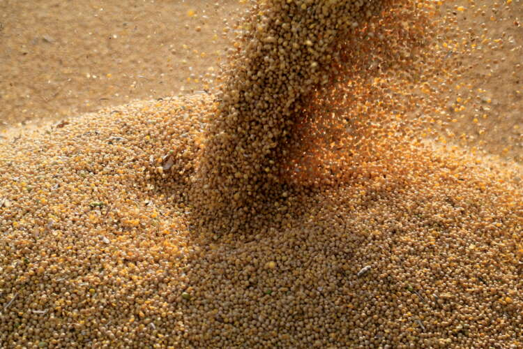 Bunge lifts profit outlook as food and fuel demand for vegetable oil grows 1