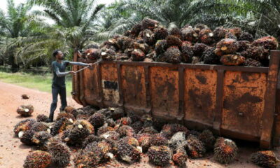 Rats, drought and labour shortages eat into global edible oil recovery 5
